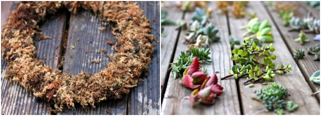 suculenta diy manualidad corona wreath succulent